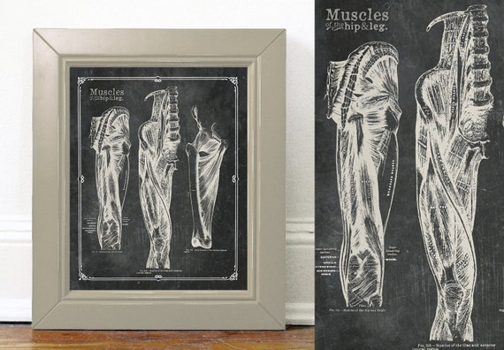 Anpassbare grau Anatomie Oberschenkel Bein Hüfte Muskeln Kohle | Etsy
