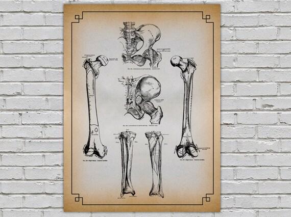 Anpassbare grau Anatomie Bein Hüftknochen Wand Dekor Diagramm