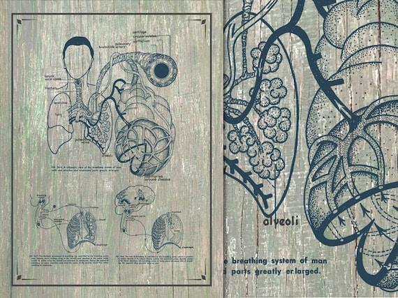 Anpassbare grau Anatomie der Lunge Vintage Poster Anleitung