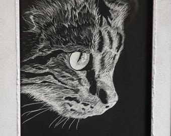 Cat of Curosity