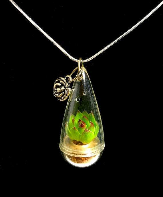 Sale Succulent Necklace Mini Lotus Succulent Terrarium Etsy
