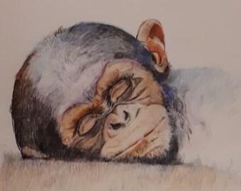 Baby chimp | Etsy