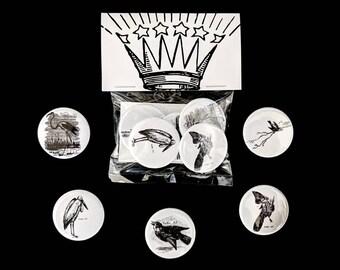 5-Pack Avian Artwork Pack - Artwork Illustration Badge Pin-back Button or Magnet