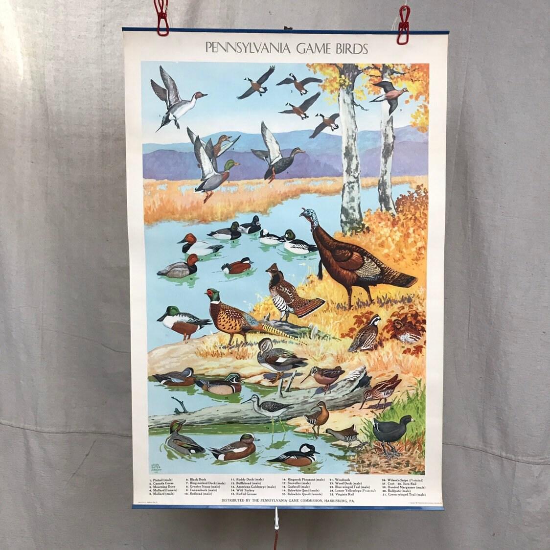 School Poster Game Birds Pennsylvania Water Fowl 1946 Penn Game Commission  Ducks Turkeys Jacob Bates Abbott Illustrator