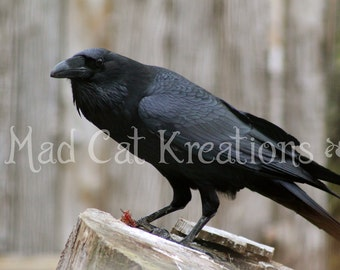 Haunting Raven