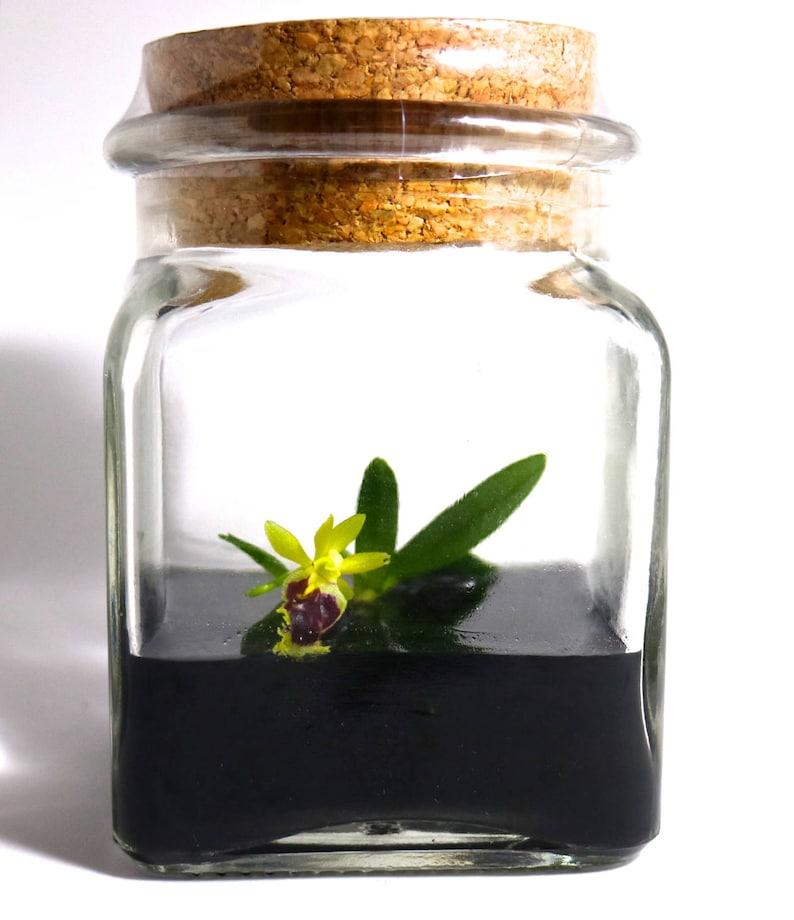 Terrarium Miniature Orchidee Orchidee Glass Terrarium Jardin Etsy