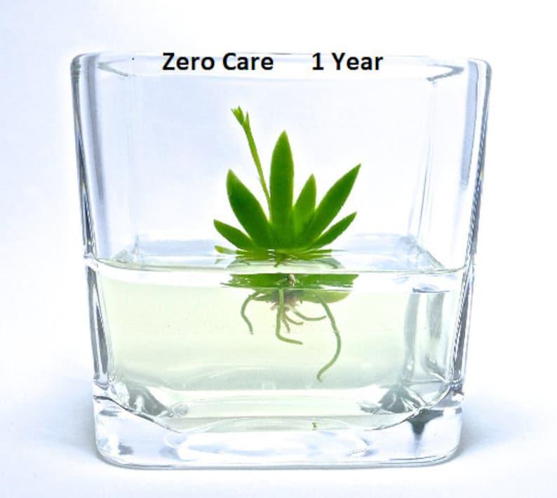 Terrarium Miniature Orchidee Orchidee Glass Terrarium Plantes Etsy