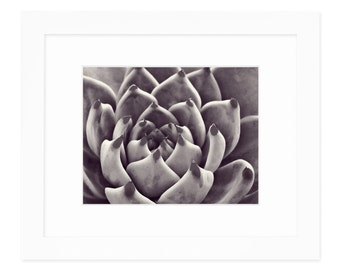 Lavendar Succulent Framed Wall Art