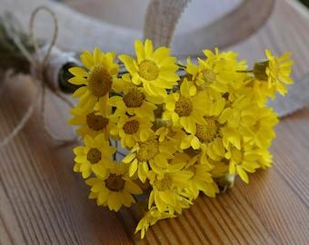 Yellow Dried Straw flowers bouquet, Preserved Helichrysum flower for decoration, dried strawflower, fragrances flower, flower centerpieces