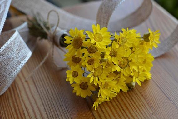 25 Cabezas de Flores Blanco Amarillo Daisy álbum de recortes elaboración de Tarjetas artesanal Adornos