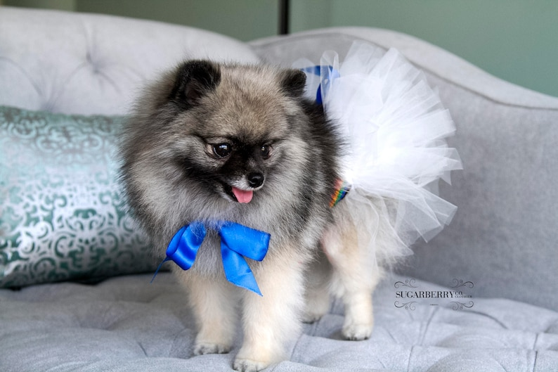 cute puppy outfit Rainbow dog tutu wedding costume Cute dog outfit Bling pet costume custom pet outfit dog photo shoot outfit