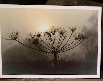 Misty Morning Hogweed (Greeting Card)
