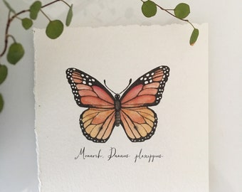 Monarch Watercolor Butterfly, 5X5 and 8X8 inch Art Print, Giclee print