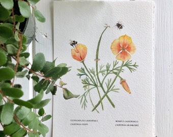 California Poppies, Botanical Print, Companion to the California Lupin, Bumble Bees, Part of a Wildflower Series of 4