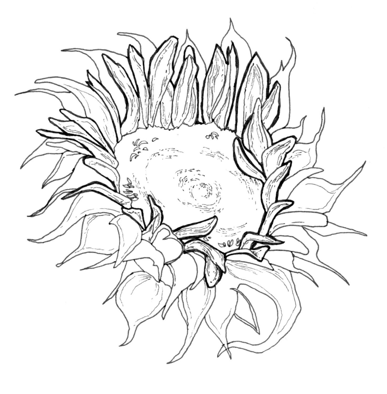 Floral Adult Coloring Book Digital Download Downloadable Etsy