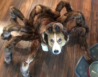 High Quality Medium Tarantula Costume by Cozy Pawz * (Skeletons not included!)
