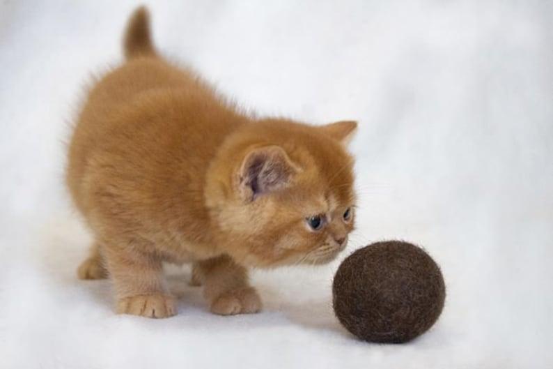 Felt Organic Catnip Ball Toy Brown set of 3 Heavy duty  image 0