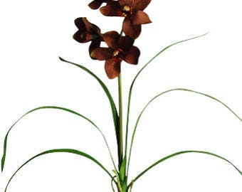 "37"" Cymbidium Orchid Plant (Pack of 2)"