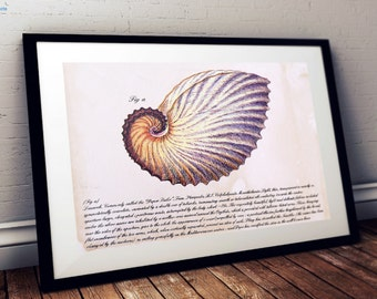 Nautilus Shell poster - Vintage reproduction print in a choice of sizes - Seashell