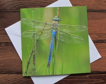 Dragonfly Greetings card 14cm square