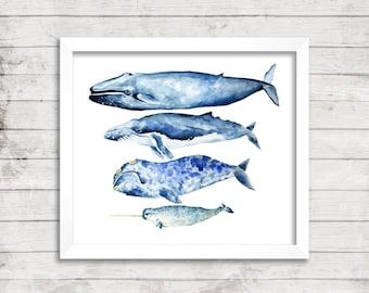 Whale Watercolor Print. Whale Art. Narwhal Print. Coastal Decor. Nautical Decor. Nursery Art. Kids Room Art. Coastal Print.