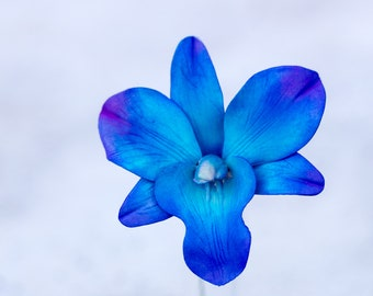 Tie Dye Blue Dendrobium Orchid Sugar Flower - Wedding Cake Topper