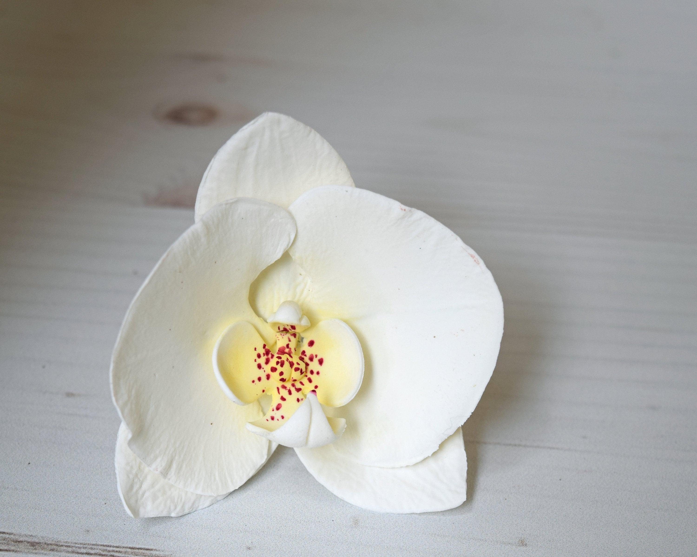 Moth Orchid Sugar Flower White Phalaenopsis Gumpaste Flower Etsy