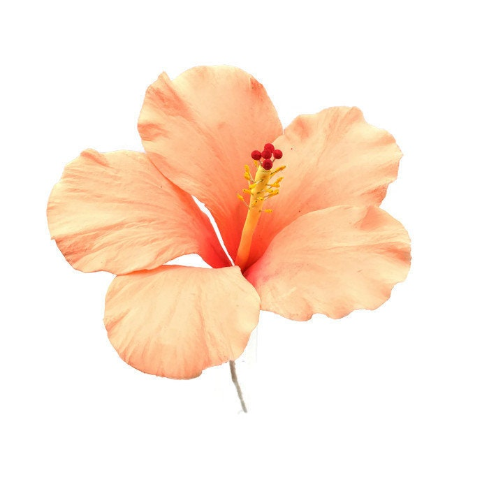 Hibiscus Sugar Flower In Peach Tones For Wedding Cake Topper