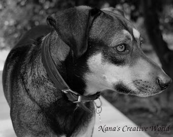 Dog Photography, Dog photo, Instant download photography, Pet photography,  Digital download,  Photo wall decor,  Black&White photo