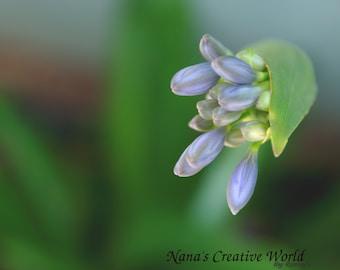 Agapanthus purple flower , Digital download, Nature photography, Flower photography,Photo art printable,Instant download, Printable photo