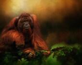 Old man Orangutan Print
