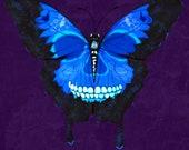 Sugar Skull Butterfly