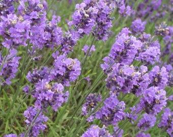 Lavender Hydrosol Liquid | Floral Water, Essential Oil, Fragrance, Soap Making