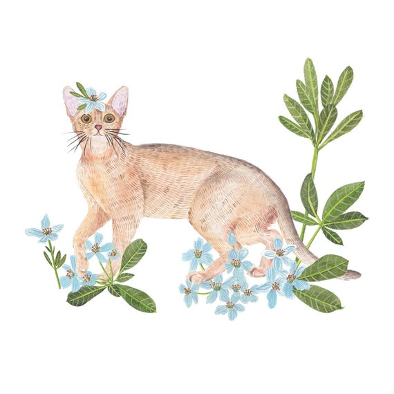 Abyssinian Cat History
