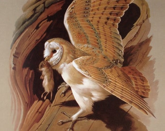 Basil Edes Birds