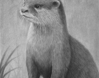 Original Otter Pencil Drawing  - American Wildlife Otter Drawing -  Nature Artwork