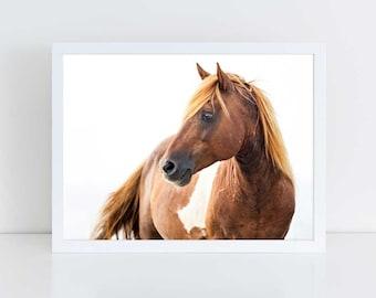 Wild Horse Photography, Horse Wall Art, Equine Print, Nursery Decor, Horse Photo, Assateague, Horse Photo, Beach Decor, Equine Portrait