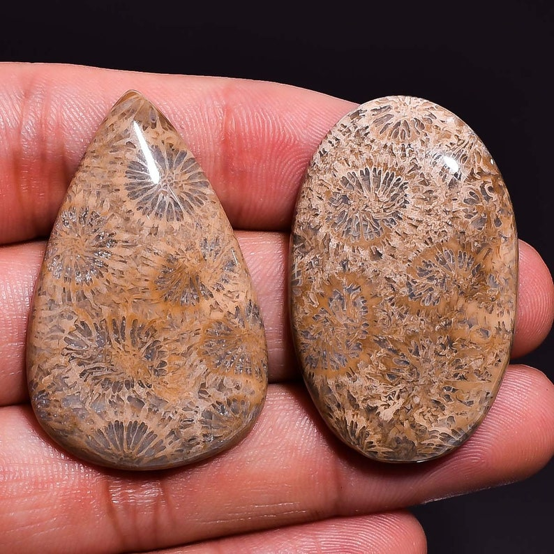 2 Pieces Natural Fossil Coral Cabochons Lot 24x39mm to 25x40mm Mix Shape Fossil Coral Gemstones Cabs Smooth Gems Cab Loose Stones
