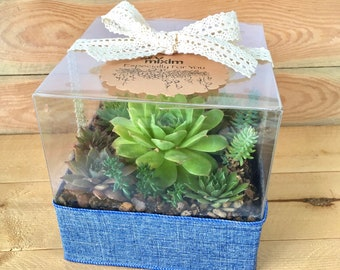 Succulent garden gift box, succulent gift box, Succulent arrangement, Succulent terrarium, Succulent greenhouse, Every occasion plant gift