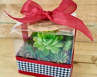 Succulent garden gift box, succulent gift box, Succulent arrangement, Succulent terrarium, Succulent greenhouse, All occasion plant gift