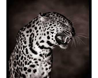 leopard, face, fine art, photography, print, tirage, wildlife, bedroom, design, wall art,gift, office, birthday, zen, gift husband wife, kid