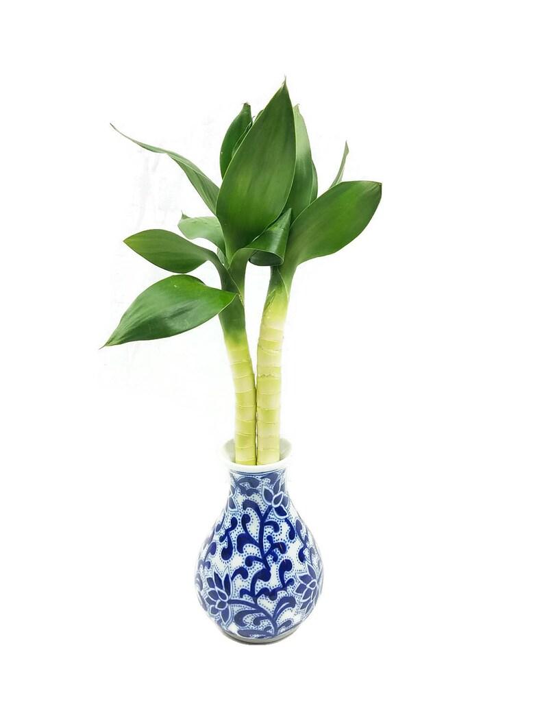 Seul Lotus Fleur Porte Bonheur Chinois Bambous Dans Un Vase Etsy