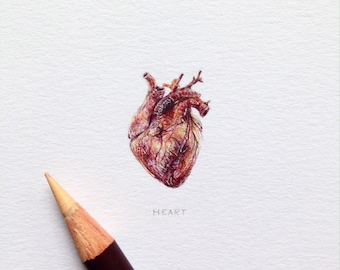 Miniature of the Heart