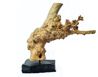 """Wooden Sculpture """"Auswüchse"""" (unique specimen)"""