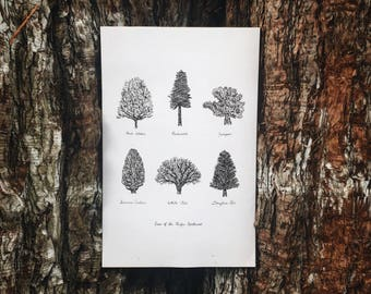 Trees of the Pacific Northwest BIG