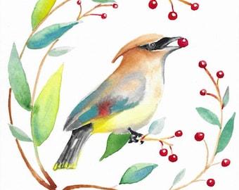 Cedar Waxwing eating red berries watercolor print