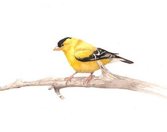 Watercolor Goldfinch Print, bird painting, yellow bird watercolor, state birds, native birds, boho decor, eclectic farmhouse, gallery wall
