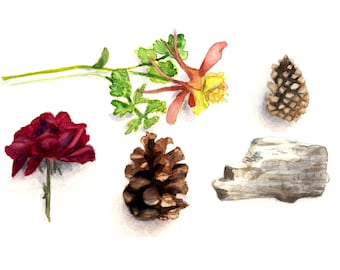 Flower and Pinecone Print 5 x 7