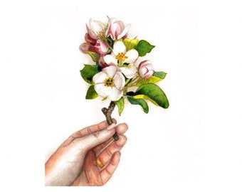 Watercolor Sprig of Apple Blossoms in a Hand, Floral Watercolor,