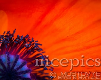 Red poppies close up abstract shot downloadable digital art print
